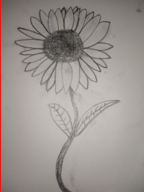 sunflower1stdraft_2020-05-22-2.jpg